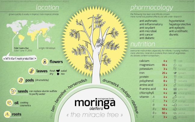 moringa-infographic